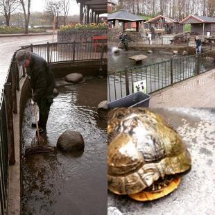 I Madsby Legepark er vi i fuld gang ogs selv om der kommer lidt vand fra oven Skildpadderne skal vaskes og have nyt vand i deres s madsbyparken madsby madsbylegepark fredericia visitfredericia 7000 forr