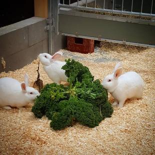 Kaninerne har fet nyt kaninhus  deerglade nythus mereplads  sdekaniner kanin kaniner madsbyparken madsbylegepark ssonbning omlidt 1april2017 fredericia visitfredericia visitlillebaelt visitdenmark facebook tripadvisor