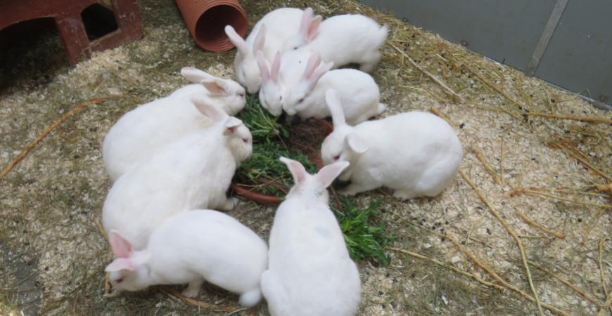 kaninerne i Legeparken