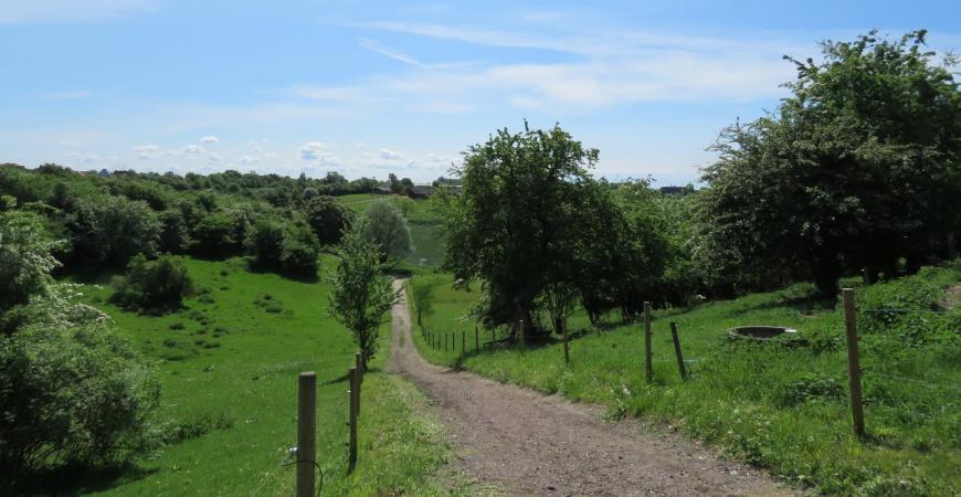 En sti i Madsbyparken, naturskønne omgivelser med grønt