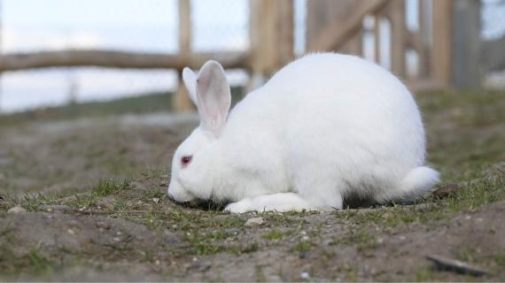 Kanin i Madsby Legepark