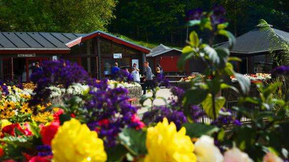 Blomster i Madsby Legepark