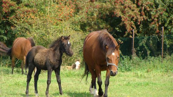 Heste i Madsby Legepark