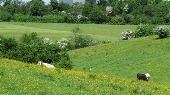 Grønne områder omrking Madsbyparken